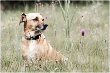 Hund in Wiese