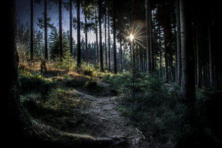 Fotos Wald Kirchschlag am Breitenstein