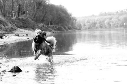 Hunde-Fotos an der Donau