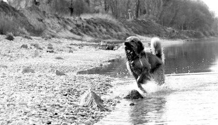 Hunde-Fotos spielen am Wasser