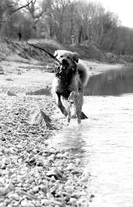 Hunde-Fotos am Wasser