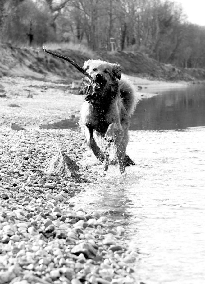 Hundefotos in Wilhering