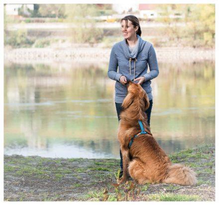 Hunde-Fotos Training