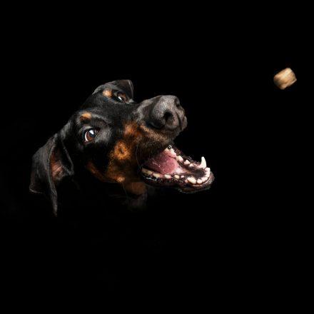 Hundefotografie Leckerli