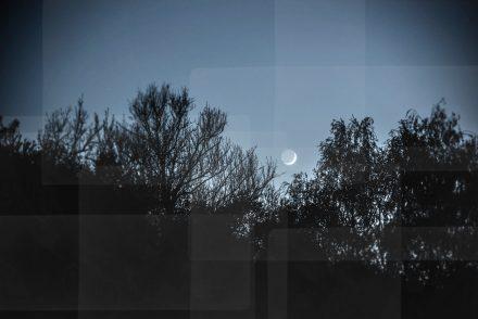 Foto Mond und Bäume