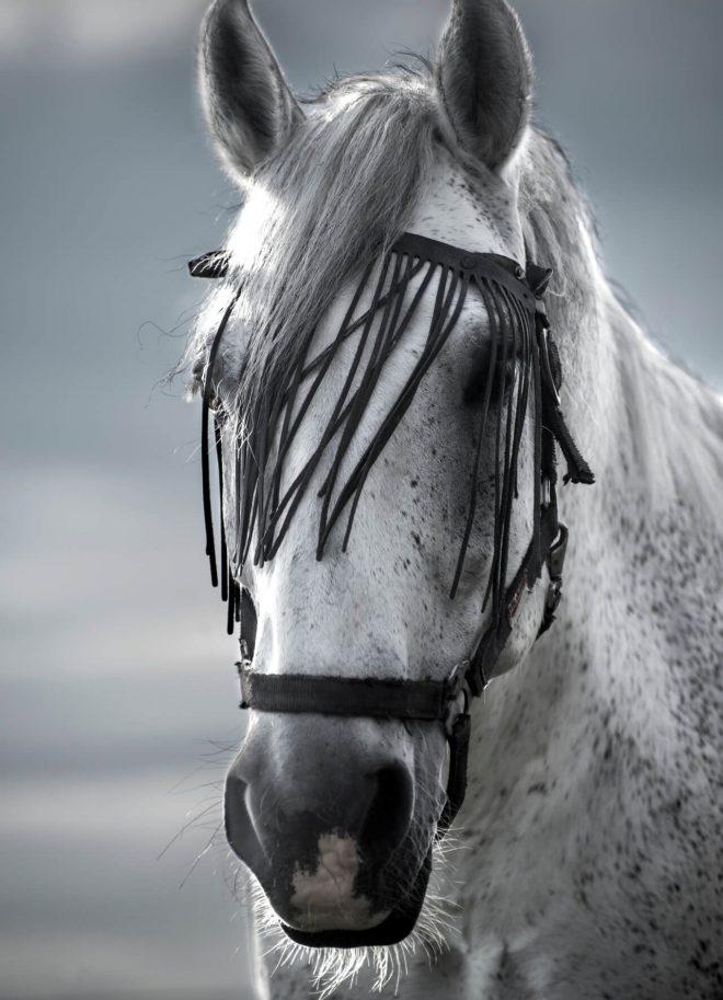 verschiedene Pferdefotos