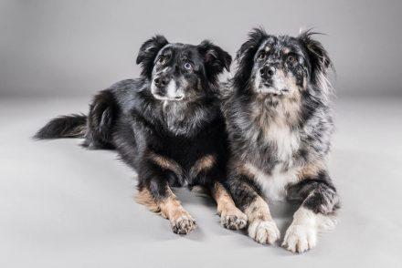 Hunde-Studiofotografie