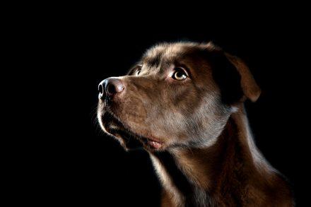 Hundeportrait STURMFotografie