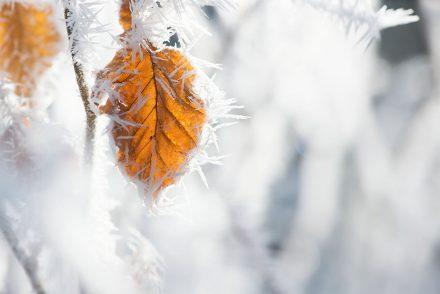 Winter Foto vereistes Blatt