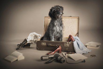 Hund Urlaub Foto