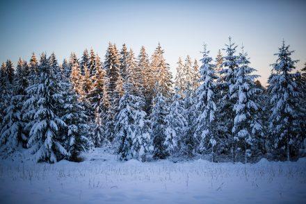 Foto Wald Hellmonsödt Winter