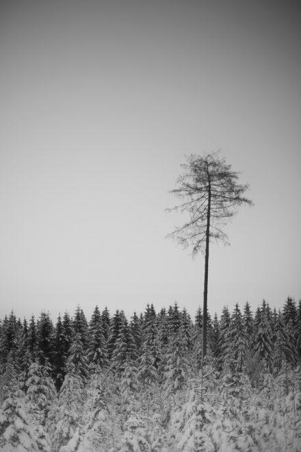 Foto Wald Hellmonsödt Kiefer