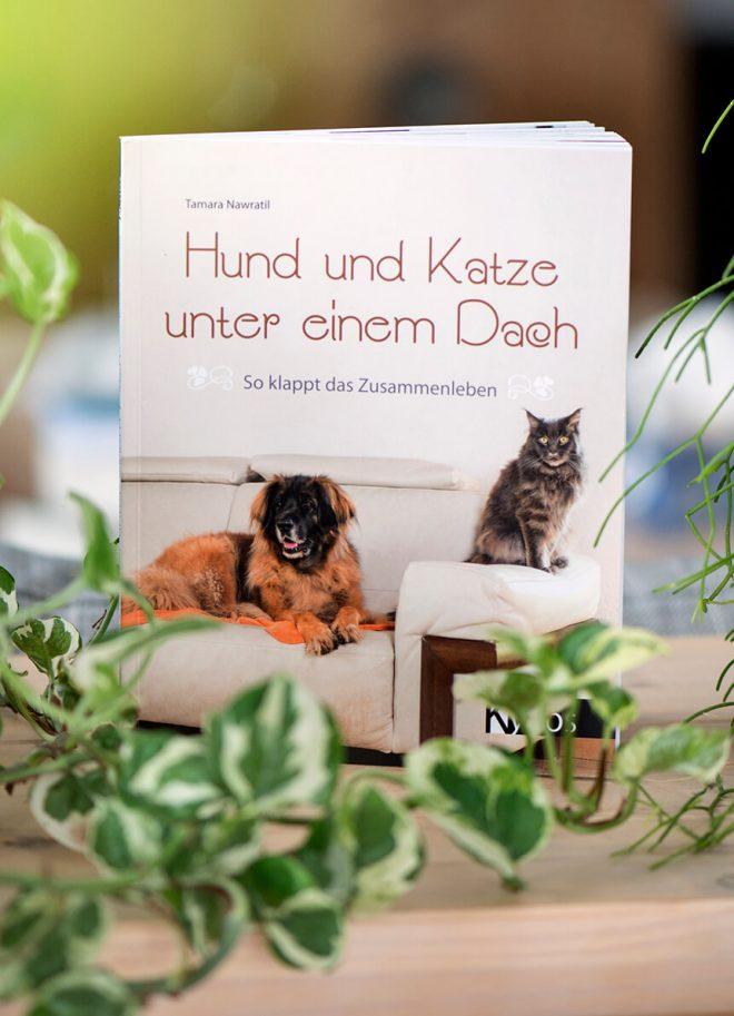 Hund & Katze unter einem Dach