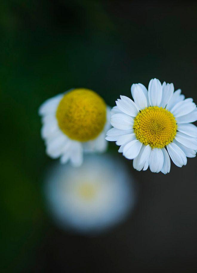 Gartenbilder