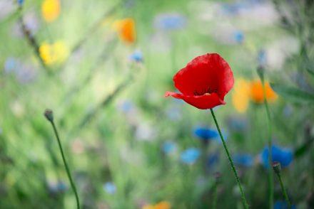 Foto Wildes Blumenbeet