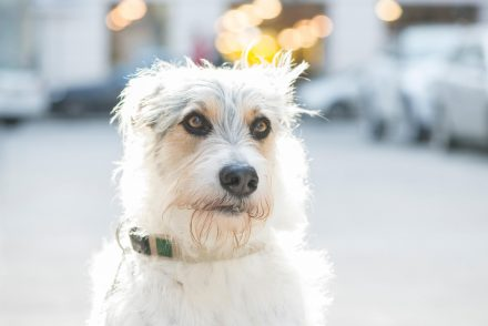 Hundeportrait Linz