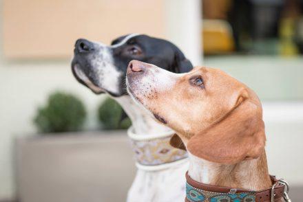 Hundeportraits Stadt Linz