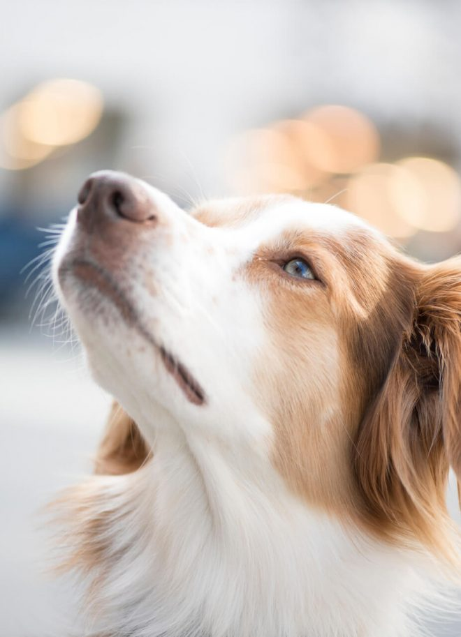 Stadtportraits Hund