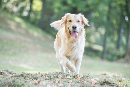 Outdoorfotografie Hund
