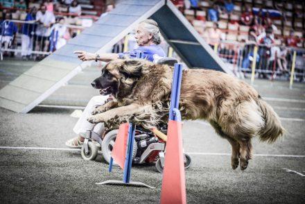 Agility & PARA Agility Weltmeisterschaft Hundefotografie
