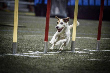 Agility Hund Hundefotografie