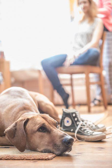 Fotografie Hochzeitsvorbereitungen mit Hund