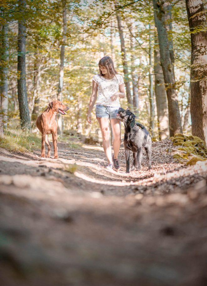 Hundefotos Mindful Dogs