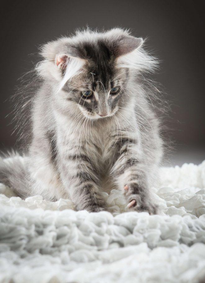 Fotos Katzenkinder