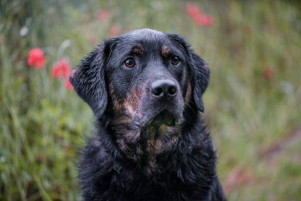 Hund Foto im Regen Portrait