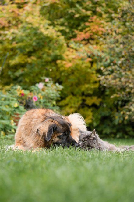 Foto Begegnung Hund und Katze Nawratil