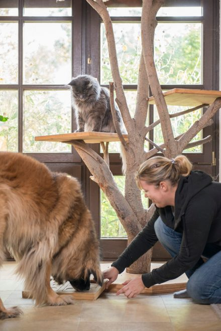 Foto Begegnung Hund und Katze