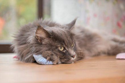 Foto Katze mit Baldrian