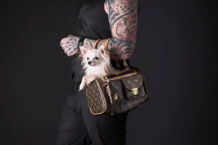 Chihuahua in Loui Vuitton-Tasche
