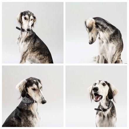 Hunde Gesichtsausdrücke Foto